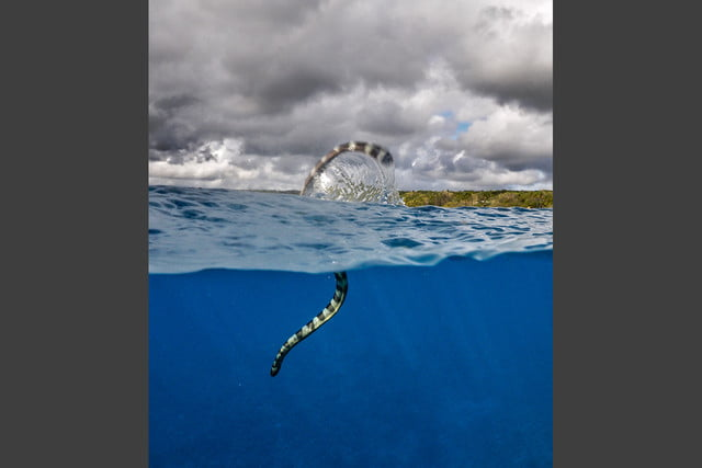 photographer jay dickmans adventurous spirit 05 banded sea krait