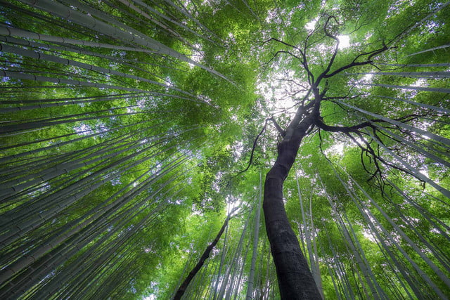 photographer jay dickmans adventurous spirit 13 arishiyama bamboo