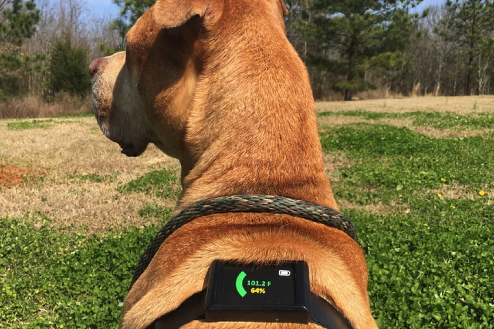 kickstarter wearable dawg tag 57b43ab1959b43f81f0a4df76f6cd319 original