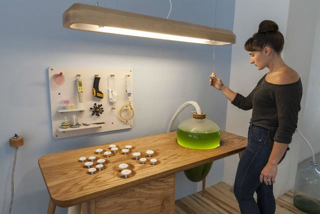 microalgae lamps can light your home and are edible algae lamp 02