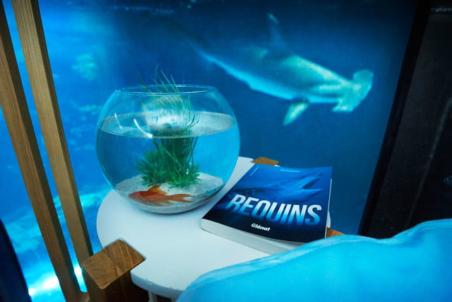 sleep underwater paris aquarium sharks airbnb de shark 001