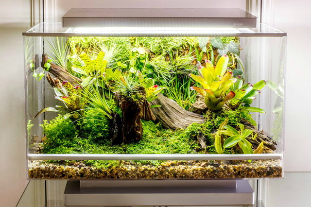 the biopod is a microhabitat thats rainforest on your countertop microclimate box