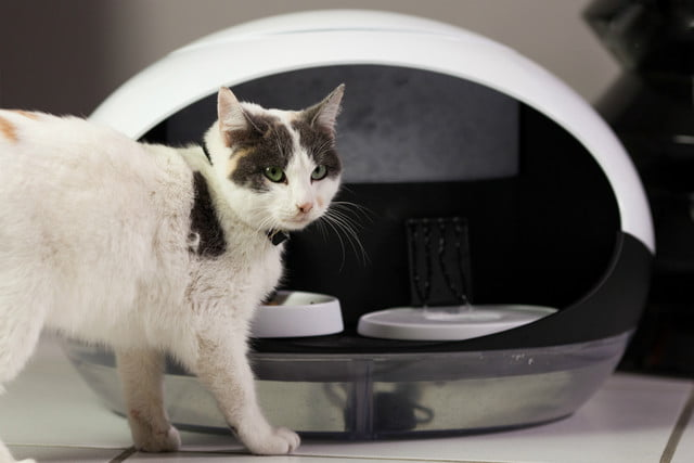 catspad is a smart food and water dispenser for cats cat feeder