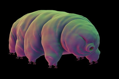 SpaceIL's Lander May Have Sent Thousands of Tardigrades to