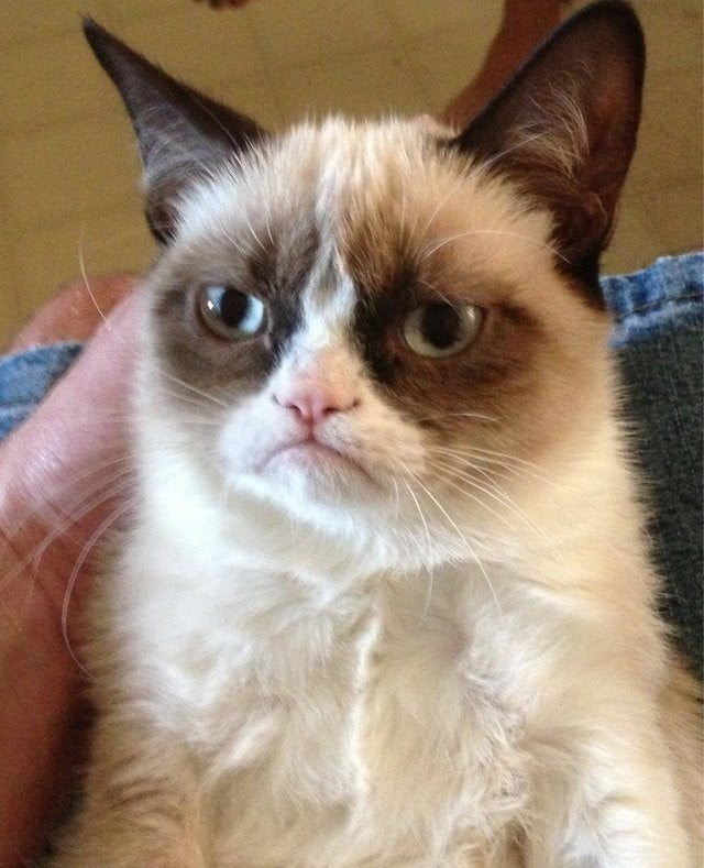 A Fond Farewell To Grumpy Cat The Internet S Most Famous Feline