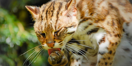 What Can a Cat DNA Test Tell You About Your Pet?   Digital