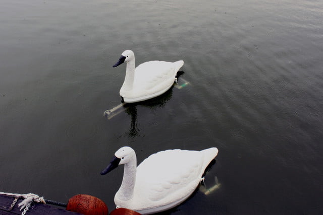 robot swan water quality img 9130