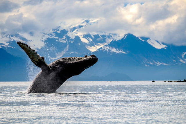 photographer jonathan irish national parks interview  glacier bay np fujifilm 5
