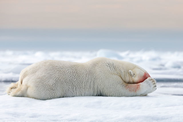 how to photograph the arctic with joshua holko interview h9p3362 edit