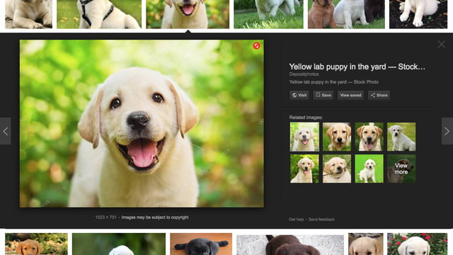 shutterstock showcase new ai search tools reveal googleexample copy