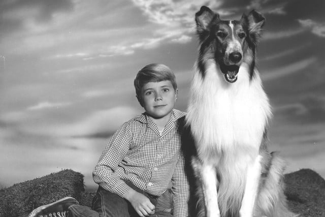 longest running scripted primetime tv shows us lassie  1954