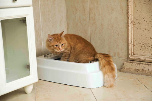 Cat Toilet Has Motion Sensors Conveyor Belt And Its Own Mobile App Digital Trends