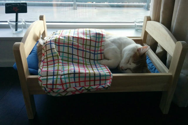 furniture and homes that are made for cat people reddit bed