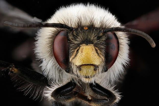 high resolution macro photos show amazing details bees wont cure fear bugs sam droge bee 3