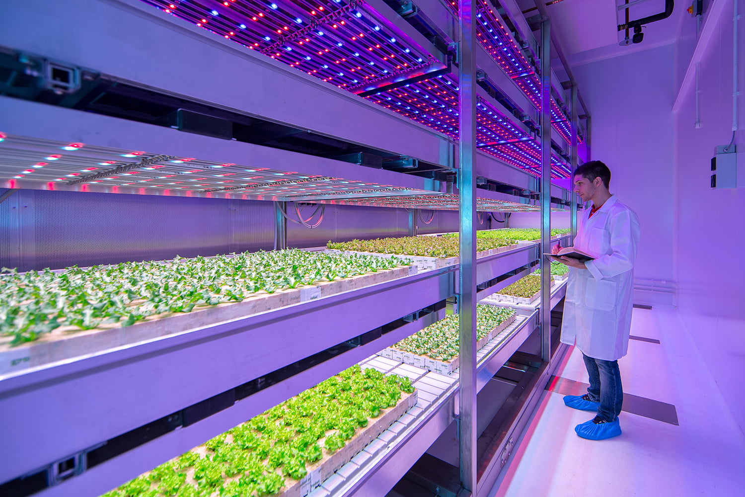 will vertical farming continue to grow or has it hit the greenhouse ceiling digital trends. Black Bedroom Furniture Sets. Home Design Ideas