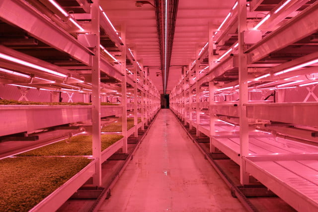 londons underground farm zero carbon food growing tunnel